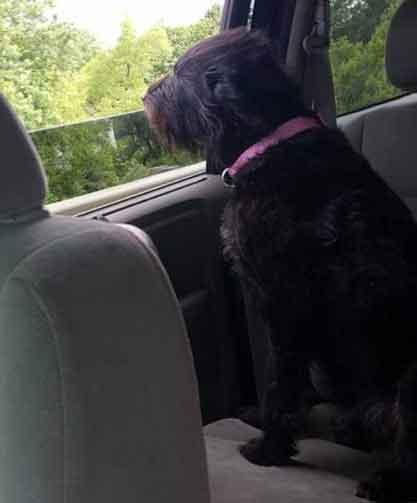 Dogs Hope - NE Ohio German Shepherd Rescue
