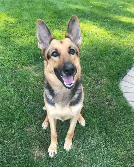 Dogs Hope Ne Ohio German Shepherd Rescue